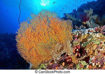 hickson's, ventile coral