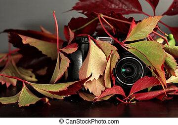 Hidden Camera - Abstract photo camera hidden in red lush...