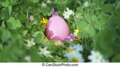 Hidden Easter egg in garden full of flowers.