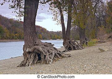 Hidden Falls Trees on Shore