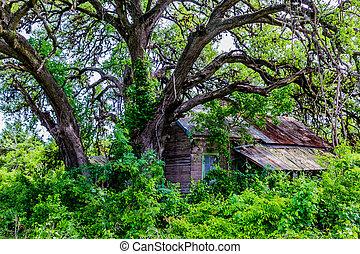 Hidden Old Abandoned Shack in Texas