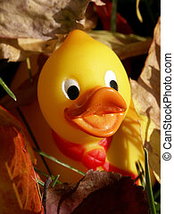Hiding - Children\\\'s rubber ducky toy hiding in the leaves