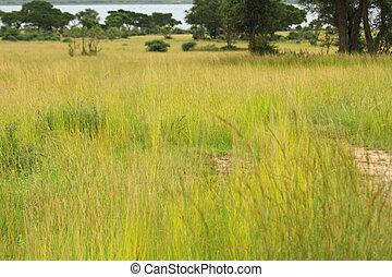 Hiding in Ugandan Grassland Savannah