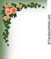 hiedra, hibisco, esquina, rosas
