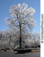 hielo, árbol