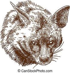 hiena, ilustración, grabado, cabeza
