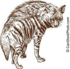 hiena, ilustración, grabado