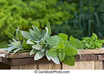 hierba medicinal