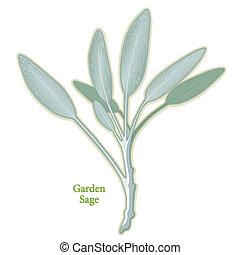 hierba, sabio, jardín