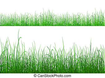 hierba verde, -, aislado, blanco