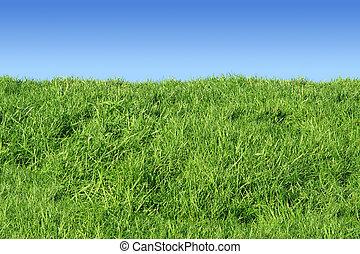 hierba verde, bank.