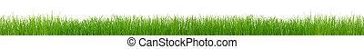 hierba verde, blanco, plano de fondo