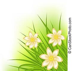 hierba verde, con, flores, primavera, plano de fondo