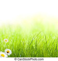 hierba verde, con, margarita, y, mariquita, en, el,...