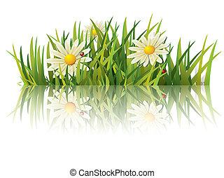 hierba verde, con, mariquita