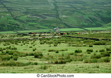 hierba verde, de, hogar