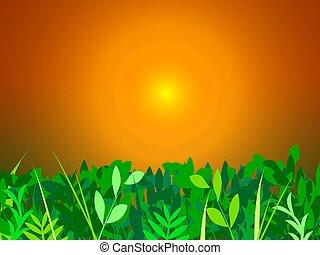 hierba verde, en, ocaso