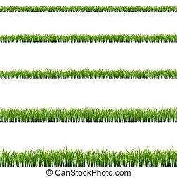 hierba verde, grande, conjunto