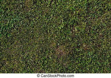 hierba verde, natural, plano de fondo