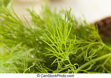 hierba, verde, orgánico, eneldo