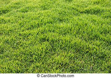 hierba verde, plano de fondo
