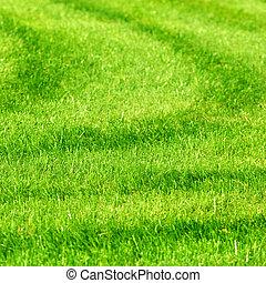 hierba verde, plano de fondo, con, rayas