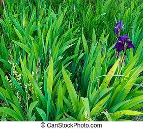 hierba verde, primer plano