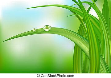 hierba verde, y, agua, drops.