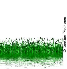hierba verde, y, agua