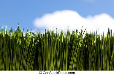 hierba verde, y, cielo