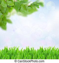 hierba verde, y, hojas, en, día soleado