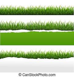 hierba verde, y, rasgado, papel, fondo blanco, conjunto
