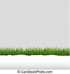 hierba verde, y, rasgado, papel, frontera, fondo blanco