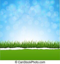 hierba verde, y, rasgado, papel, naturaleza, plano de fondo