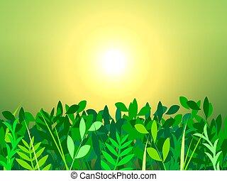 hierba verde, y, sol