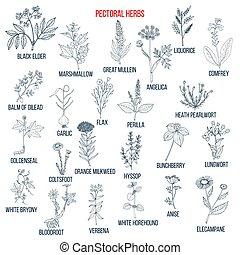 hierbas, conjunto, pectoral