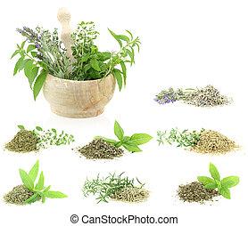 hierbas, especias, colección