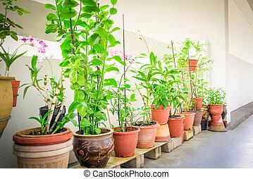 hierbas, flores, balcón, ollas, singapur, orgánico, jardín, encima, público, caja, vegetal