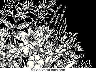 hierbas, gráfico, especias