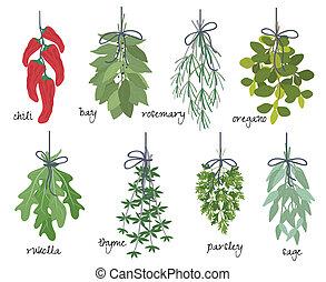 hierbas, medicinal, aromático, ramos