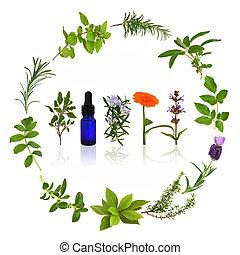 hierbas, medicinal, culinario