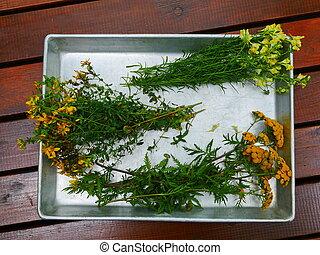 hierbas, medicinal, pequeño, ramos