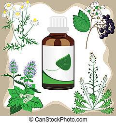 hierbas, medicinal, vector, botella