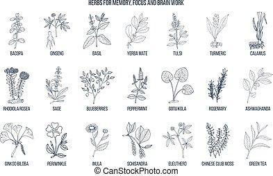 hierbas, trabajo, foco, cerebro, memoria, medicinal, mejor