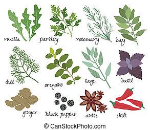 hierbas, vector, especias