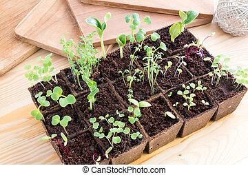 hierbas, vegetales, ollas, turba, plantas de semilla