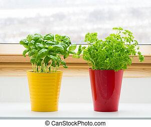 hierbas, ventana, cocina