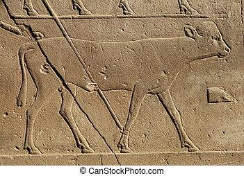 hieroglyphic, 牛, エジプト人