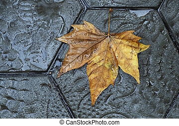 dry leaf on the pavement of a street in Barcelona