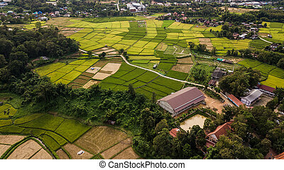 High angle view of Field in Thailand